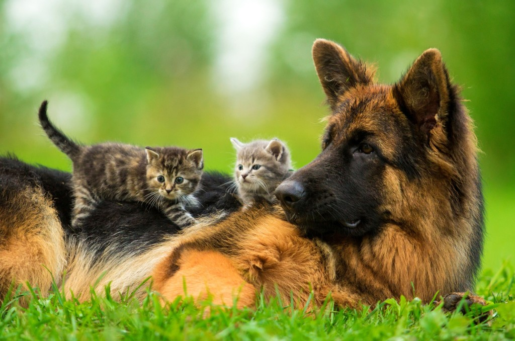 dog_and_kittens
